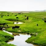 """country creek"" by melissaanderson"