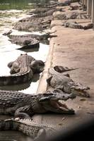 More Crocodiles Than You Can Use