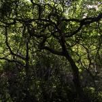 """""""Maui Rain Forest"""" by MWDunlop"""