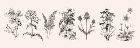 Botanical Studies