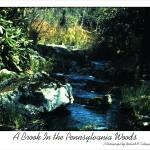 """""""A Brook in the Pennsylvania Woods"""" by rmeslinger"""