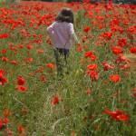 """""""Poppy Field"""" by kentsmudger"""