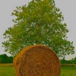 """Round Hay Bale, Triangle Tree"" by DearbornDesign"