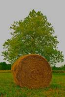 Round Hay Bale, Triangle Tree