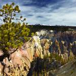 """Tree at the Grand Canyon of the Yellowstone"" by Jason_Speer_Photo"