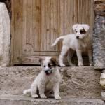 """Pups"" by JenniferEdwards"