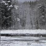 """Spring"" by ThistleDew"