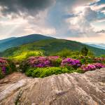 """Jane Bald in Bloom - Roan Mountain Highlands Lands"" by DAPhoto"