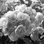 """Bouquet"" by britefloralsetc"