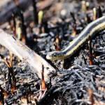 """""""Garter Snake"""" by jlipps123"""