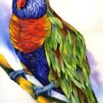 """Rainbow Lory"" by GayelaChapman"