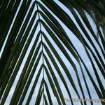 """palm tree"" by ThirstyPhotographer"