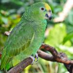 """Green Parrot"" by sandymaclean"