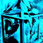 """Blue Lantern"" by luv4pix"