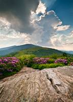Roan Mountain Rays - Jane Bald Landscape