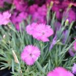 """""""Pink Flower Garden"""" by PatriciaSanders"""