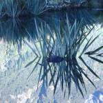 """Mirror Lakes Fiordland Milford Sound flax"" by campbellpotter"