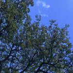 """Tree against a blue sky"" by Countryside-Photos"