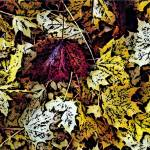 """""""leaves1"""" by GingerPhotography"""