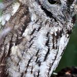 """""""owl"""" by GingerPhotography"""