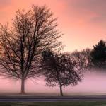"""Mist"" by jessicamanos"
