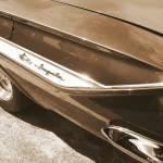 """impala"" by GingerPhotography"
