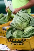Reckamp Farm Cabbage