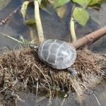 """Turtle"" by dcotnoir"