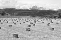 Bales Of Hay The Twin Peaks BW