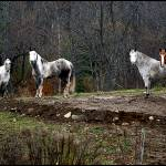 """Ghost Horses in Landgrove, Vermont"" by visualcontact"