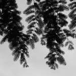 """Evergreen"" by britefloralsetc"