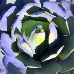 """Inviting Cactus"" by luv4pix"