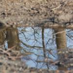 """Puddle Mirror"" by TaraEllisPhotography"