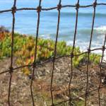"""Fenced In"" by luv4pix"
