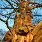 """Sweet Chestnut"" by terrycatton"