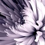 """Bloom"" by JDCAPTURE"