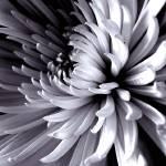 """Bloom 2"" by JDCAPTURE"