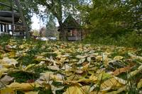 yellow leaves and gazebo