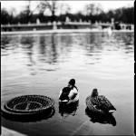 """""""Jardin du luxembourg"""" by xinh-xu"""