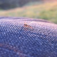 Friendly Insect Art Prints & Posters by Jennifer Montemayor