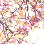 """Flower Tree, tint 3, DW"" by WardsArtGallery"