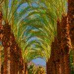"""Palm Tree Colonnade"" by RobinCowles"