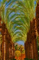 Palm Tree Colonnade