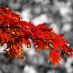 """Autumn"" by KarolinaDebowska"