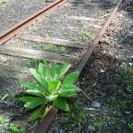 """Overgrown Railroad Tracks"" by smc762"
