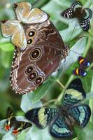 Morpho at Rest