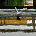 """Duck Punt"" by sandymaclean"