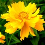 """""""Yellow 4"""" by JDCAPTURE"""