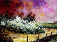 Hawthorn in blossom landscape