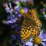"""""""Orange Butterfly"""" by BLPhoto"""